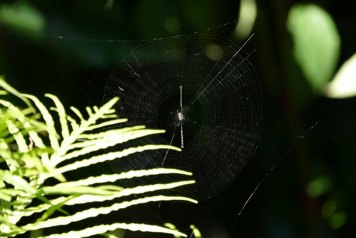 Using macro mode with the zoom to capture the web.
