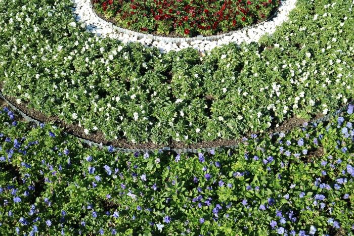 Making use of the LCD screen's angles to capture this flower bed's pattern from above.