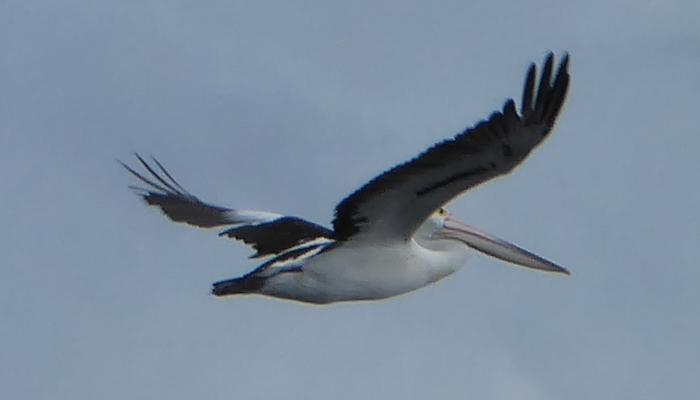 A 100 per cent crop of the bird in the previous picture.
